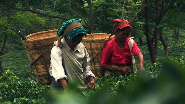 Darjeeling01